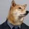 El perro modelo que cobra 12 mil euros al mes