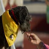 El cáncer puede ser detectado por perros